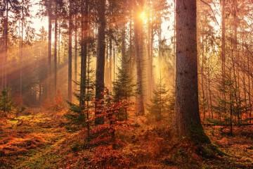 Những trái tim mùa thu